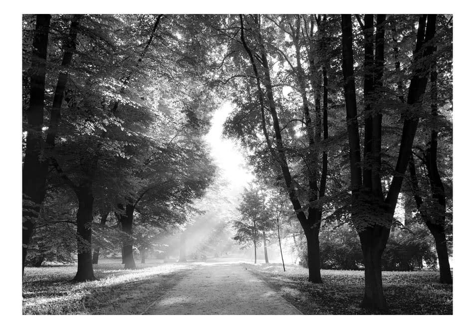 Fototapeta samoprzylepna – Ścieżka wspomnień