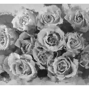 Fototapeta – A dozen roses