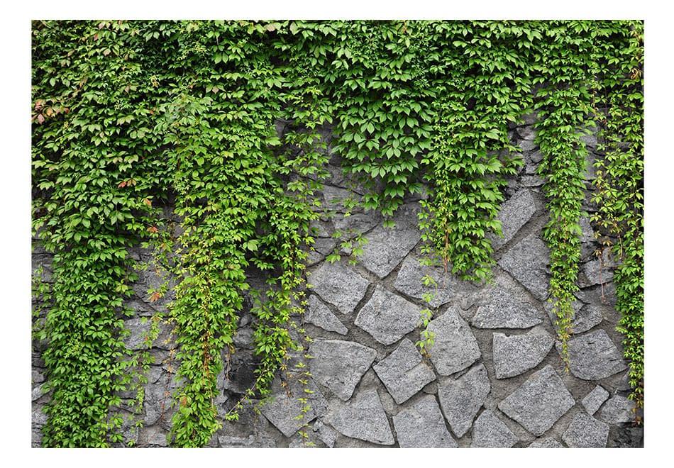 Fototapeta – Zielony mur