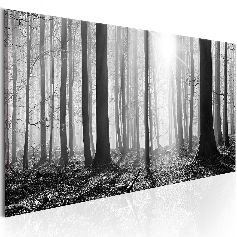 Obraz – Czarno-biały las