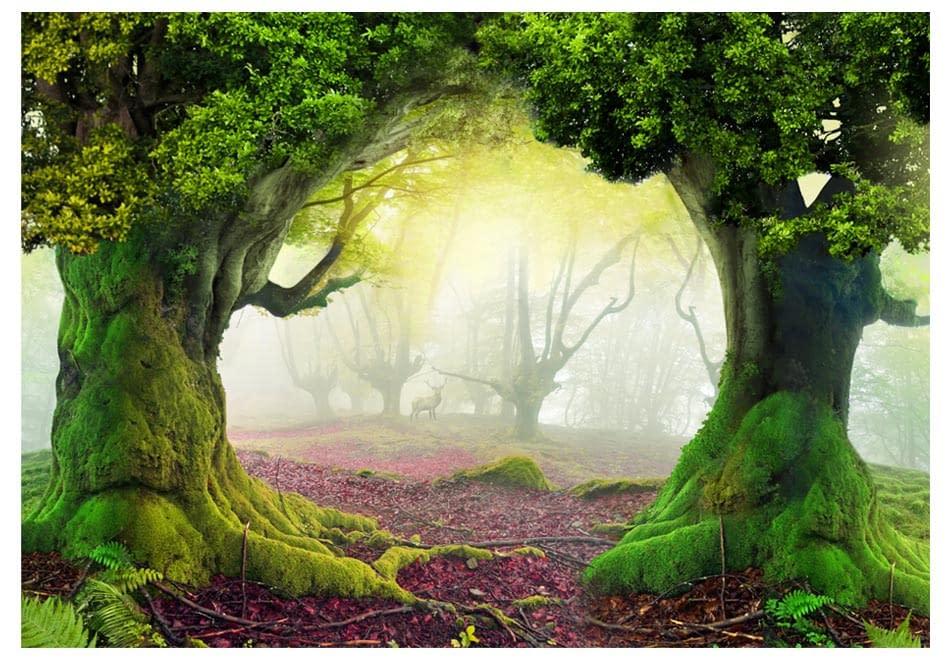 Fototapeta samoprzylepna – Zaczarowany las